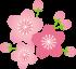 top-icon-sakura